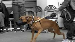 Growl Class - A Workshop Demo for Reactive Dogs Udemy Coupon & Review