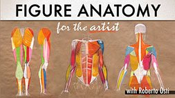 Figure Anatomy for the Artist Craftsy Review