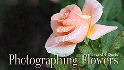 Photographing Flowers Craftsy Review