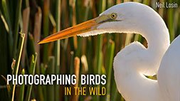 Photographing Birds in the Wild Craftsy Review