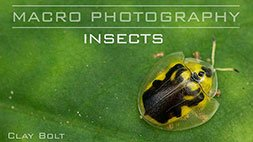 Macro Photography: Insects Craftsy Review