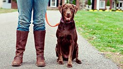 Simple Solutions for Common Dog Behavior & Training Problems Udemy Coupon & Review