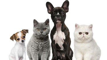 Animal Reiki Practitioner Certification Udemy Coupon & Review